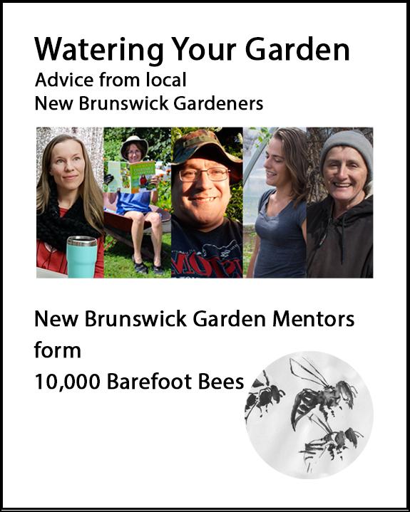 Watering advice from local New Brunswick Gardeners