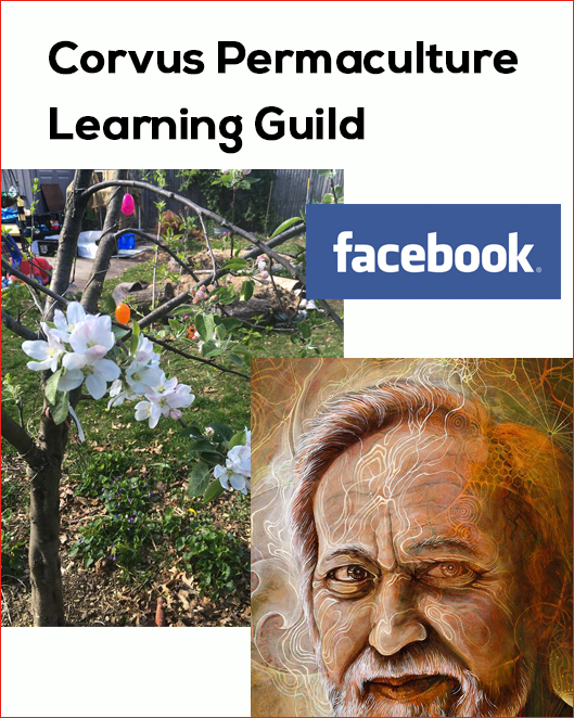 Corvus Permaculture Learning Guild Facebook Page