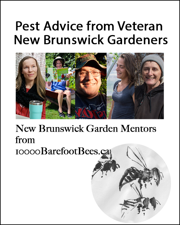 Pests. You Know They're Coming. Some Advice from Our Local NB Garden Mentors